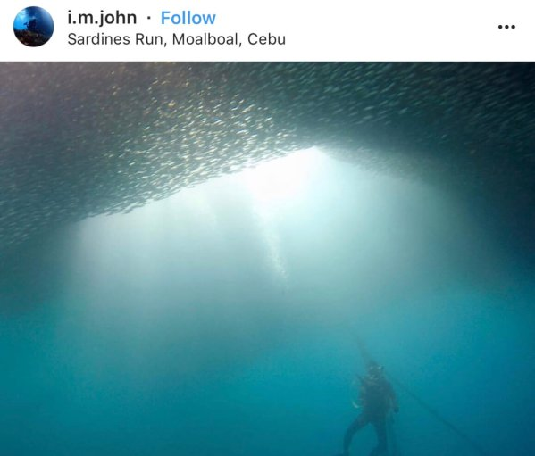 Sardine Run - The Top 20 Best Instagram Locations in the Philippines!
