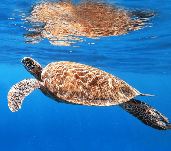 Turtles in the Philippines - 10 things you didnt know about the Philippines!