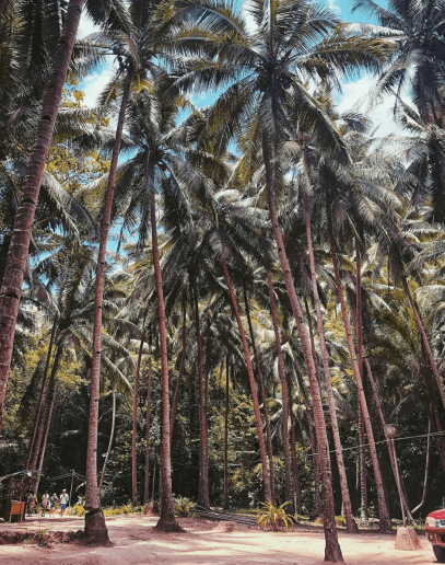Palm Trees - 10 things you didnt know about the Philippines!